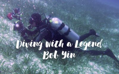 Dive Seafari – Diving with Legends