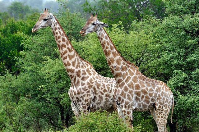 Week 1 in South Africa – Joburg and Kruger