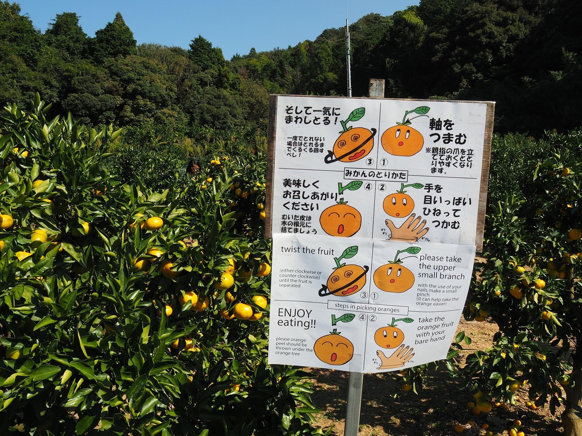 Gamagori Orange Park