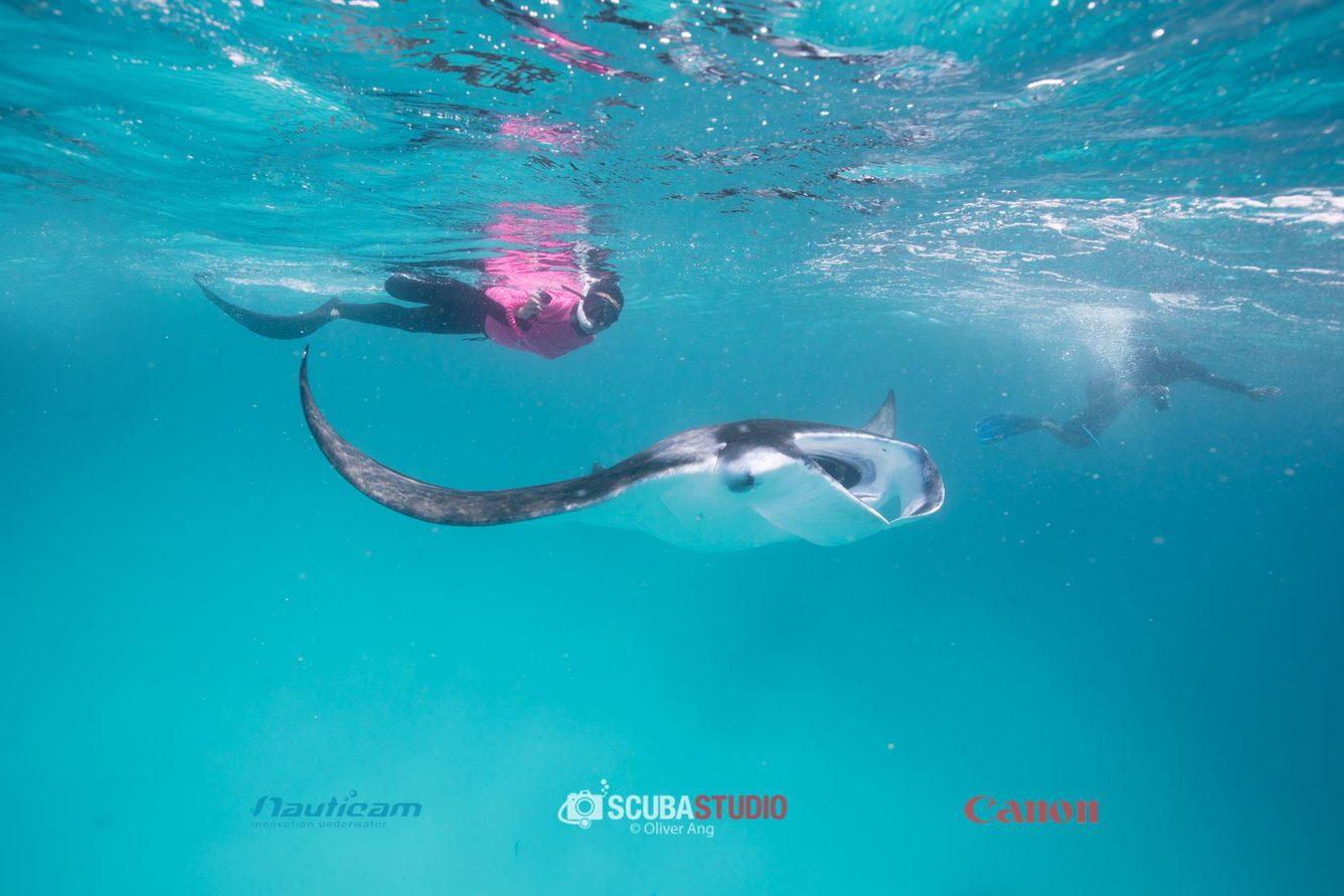 Diving Hanifaru Maldives